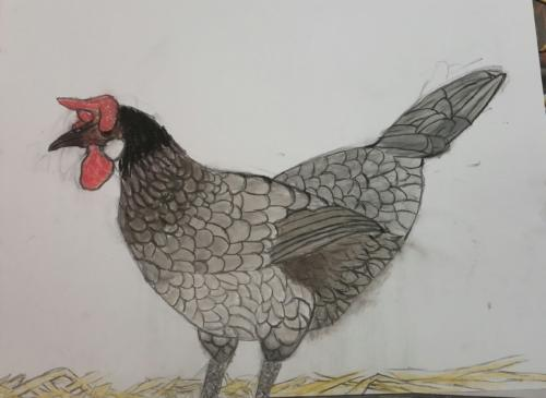 <span>Hen Pastel on Paper Age 9 </span><br>(80xmx55cm)